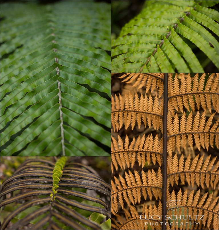Different Ferns