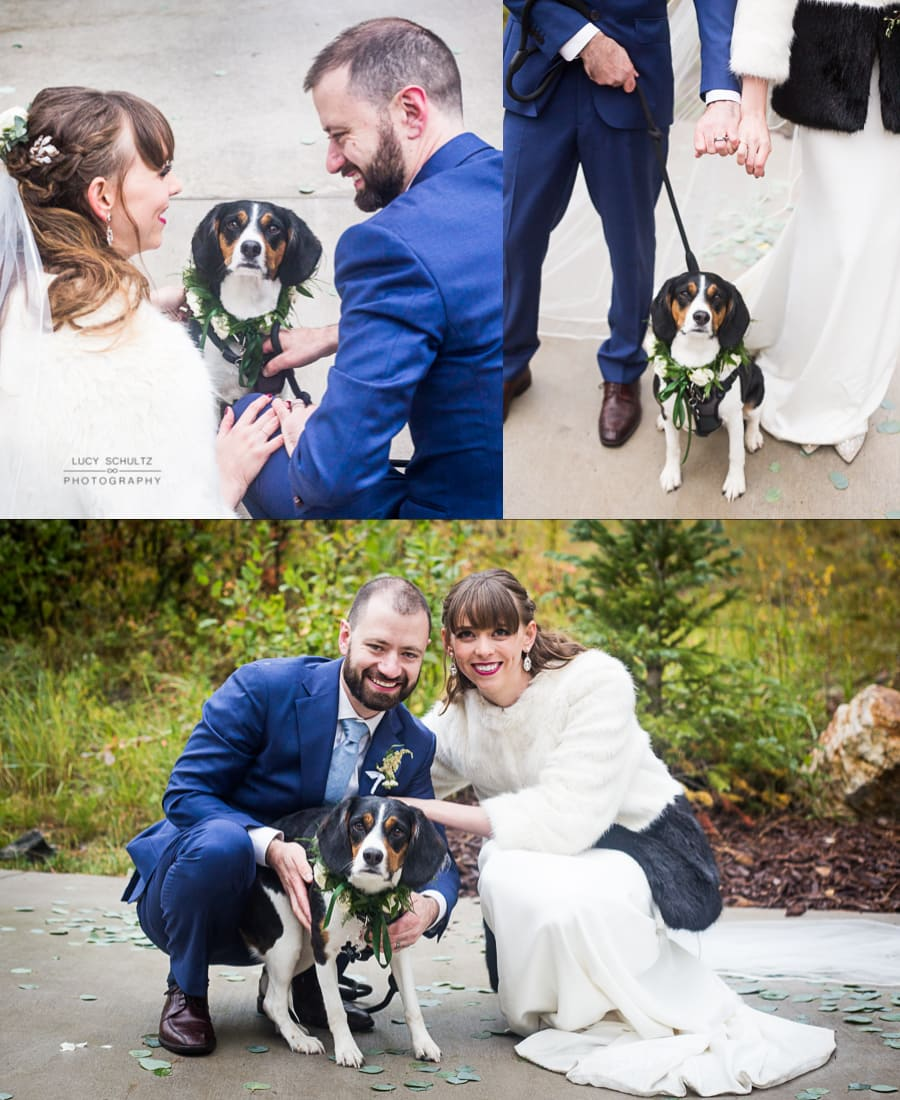 WeddingPhotosWithDogs1